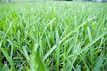 Gros plan d'herbe
