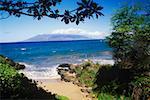 Rocks and trees on the beach, Hawaii, USA