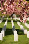 Close-up of flowers in a cemetery Arlington National Cemetery, Arlington, Virginia, USA