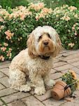 Dog Sitting Beside Broken Flower Pot