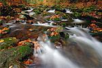 Brook, Parc National des forêts bavaroises, Bavière, Allemagne