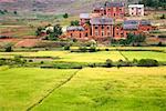 Rice Fields Near Behenjy, Madagascar
