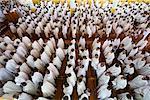 People Worshipping in Church, Soatanana, Madagascar
