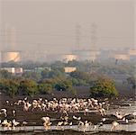 Vue grand angle sur une volée d'oiseaux dans un lac, Mumbai, Maharashtra, Inde