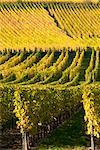 Vignoble, Alsace, France