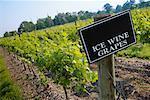 Vin de glace Vineyard, Inniskillin Winery, Niagara on the Lake, Ontario, Canada