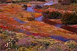 Fleurs sauvages de la rivière, Wallekraal, Namaqualand, Northern Cape, en Afrique du Sud
