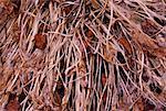 Gros plan de Hosta feuilles en automne