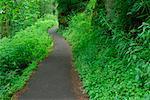 Footpath at Guy W. Talbot State Park, Multnomah County, Oregon, USA