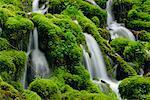 Fairy Creek, Columbia River Gorge, Oregon, USA