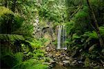 Hopetoun Falls, Great Otway National Park, Victoria, Australia
