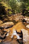 Aire River, Great Otway National Park, Victoria, Australia