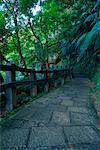 Sentier de randonnée à travers la montagne d'éléphant, Taipei, Taiwan