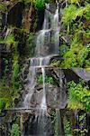 Waterfall in Mount Rainier National Park, Washington, USA
