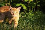 Kitten Stalking Prey