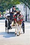 Man riding a horse cart, Savannah Georgia, USA