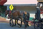 Rear view of a man standing on a horse cart, Savannah, Georgia, USA