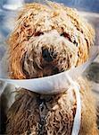 Dog Wearing Protective Collar