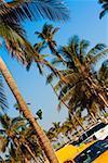 Palm tree on the roadside, Miami, Florida, USA