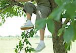 Garçon assis dans l'arborescence, partie basse