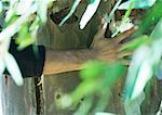 Homme de main sur le tronc d'arbre, des feuilles en premier plan