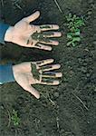 Mains de l'homme couverts de sol
