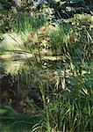Étang et la végétation