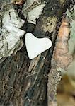 Coeur en forme de pierre sur l'écorce