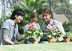 Familie tendiert Topfpflanzen