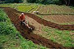 Homme labourant le sol ferme végétale, Taipei, Taiwan