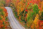 Forest Road in Autumn, Ontario, Canada