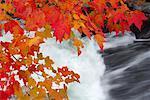 Érable à feuilles d'automne par cascade, Parc Provincial Algonquin, Ontario, Canada