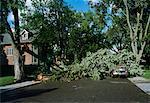 Damaged Tree on Road