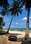 Palm Trees, Bai Truong, Island of Phu Quoc, Vietnam