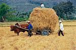 Agriculteurs avec panier de paille de riz, Vietnam