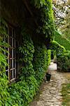 Grape vines and House, Villeneuve l'Archeveque, Bourgogne, France