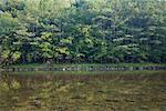 Cairns Pool, Beaverkill River, Catskill Park, New York, USA