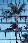 Low Angle View einer Palme außerhalb eines Gebäudes