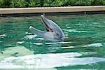 Dauphin en piscine
