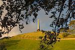 Ein Baum-Hügel, Cornwall Park, Auckland, Nordinsel, Neuseeland