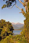Lake Moeraki, Westland, South Island, Nouvelle-Zélande