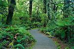 Path, South Westland, South Island, New Zealand