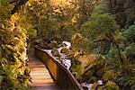 Rivière Hollyford, Westland Sud, South Island, Nouvelle-Zélande