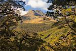Vallée Hollyford, Westland Sud, South Island, Nouvelle-Zélande