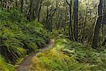Rainforest, Lewis Pass, South Island, New Zealand