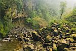 Mountain Creek, Egmont National Park, North Island, Nouvelle-Zélande