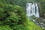 Marokopa Falls, King Country, North Island, Nouvelle-Zélande