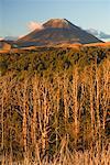 Mont Ngauruhoe, Tongariro National Park, North Island, Nouvelle-Zélande