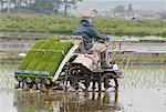 Agriculteur de plantation de riz, Japon