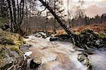 Stream, Highland, Scotland, UK
